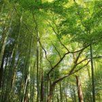 trees-1031415_640